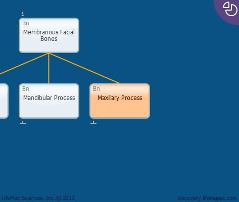Maxillary Process