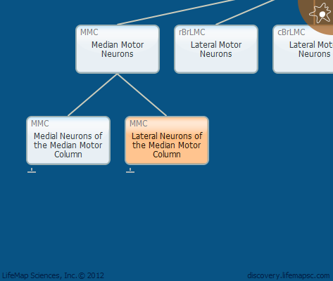 Lateral Neurons of the Median Motor Column