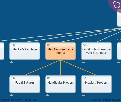 Membranous Facial Bones
