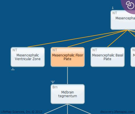 Mesencephalic Floor Plate
