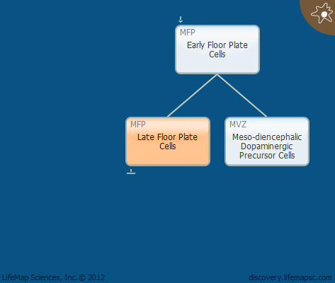 Late Floor Plate Cells
