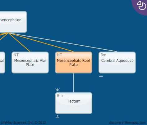 Mesencephalic Roof Plate