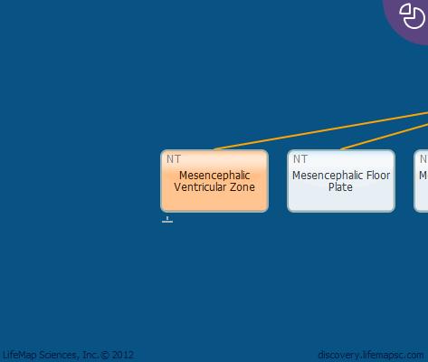Mesencephalic Ventricular Zone