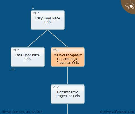 Meso-diencephalic Dopaminergic Precursor Cells