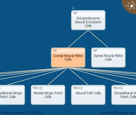 Cranial Neural Plate Cells
