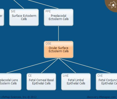Ocular Surface Ectoderm Cells