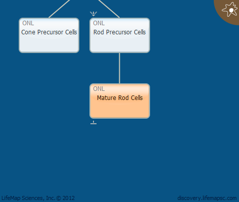 Mature Rod Cells