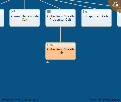 Outer Root Sheath Cells