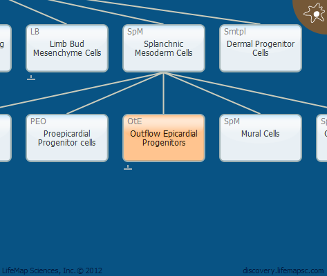 Outflow Epicardial Progenitors