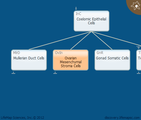 Ovarian Mesenchymal Stroma Cells