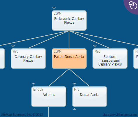 Paired Dorsal Aorta