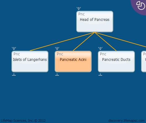 Pancreatic Acini