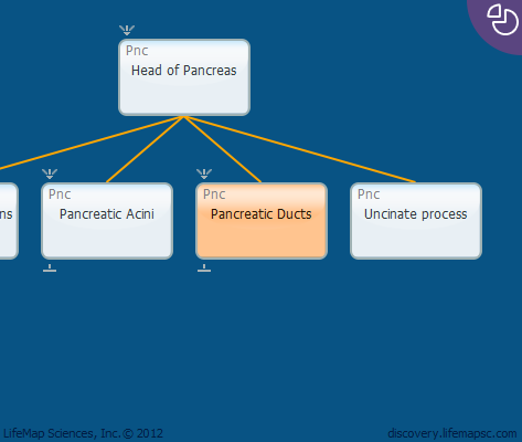Pancreatic Ducts