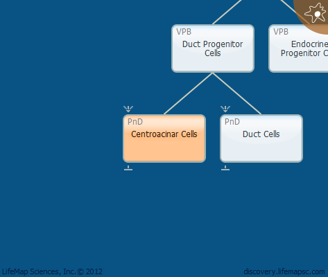 Centroacinar Cells