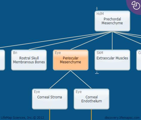 Periocular Mesenchyme