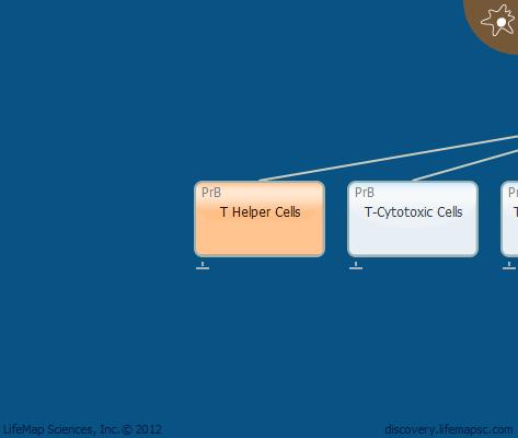 T Helper Cells