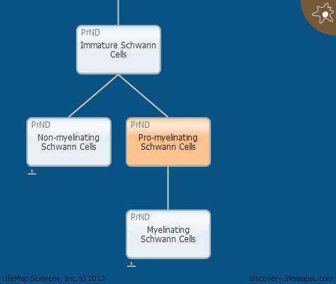 Pro-myelinating Schwann Cells