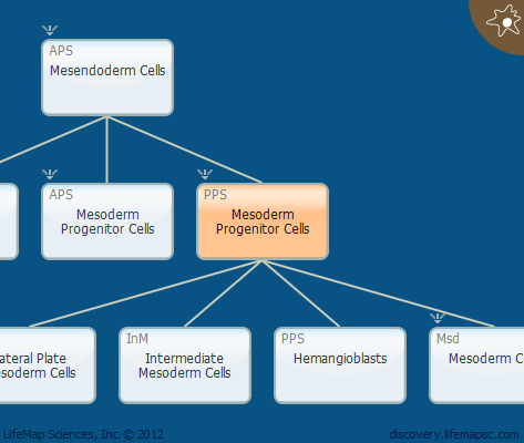 Mesoderm Progenitor Cells