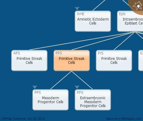 Primitive Streak Cells
