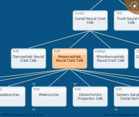 Mesencephalic Neural Crest Cells