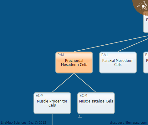 Prechordal Mesoderm Cells