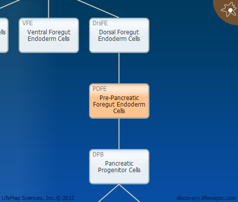 Pre-Pancreatic Foregut Endoderm Cells