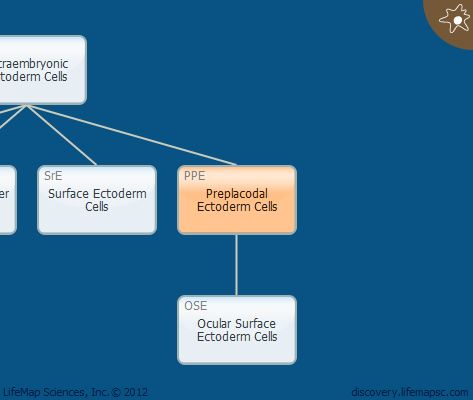 Preplacodal Ectoderm Cells