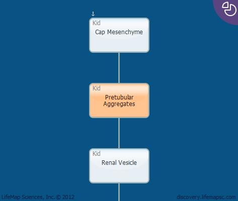 Pretubular Aggregates
