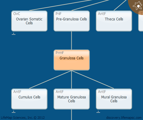 Granulosa Cells