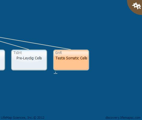Testis Somatic Cells