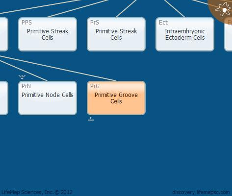 Primitive Groove Cells