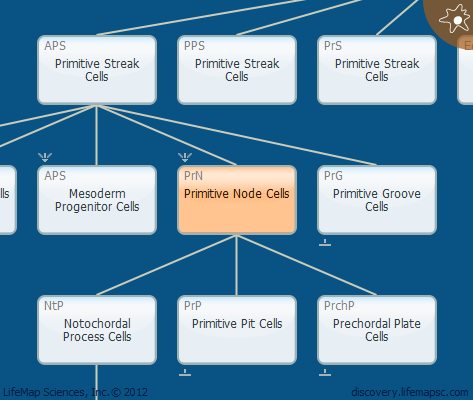 Primitive Node Cells