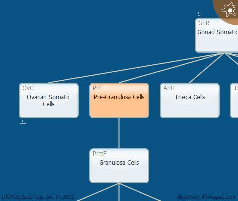 Pre-Granulosa Cells