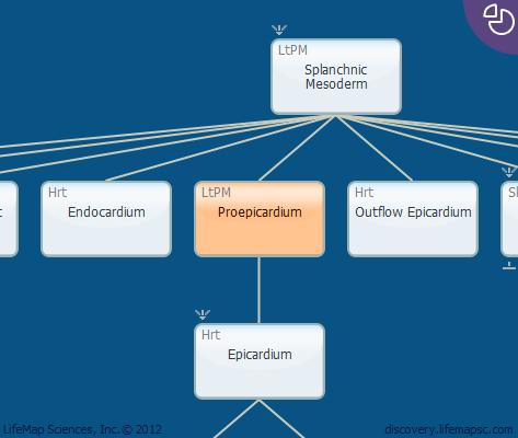 Proepicardium