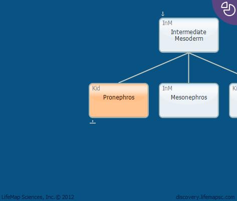 Pronephros