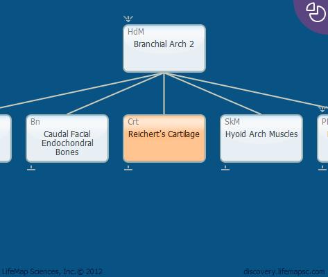 Reichert's Cartilage
