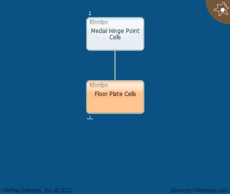 Floor Plate Cells