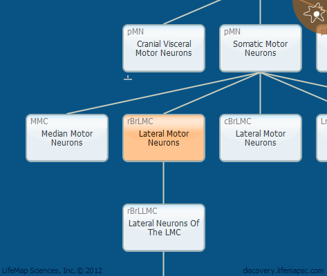 Lateral Motor Neurons
