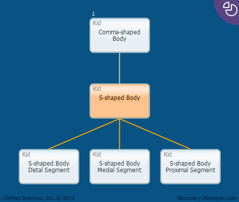 S-shaped Body