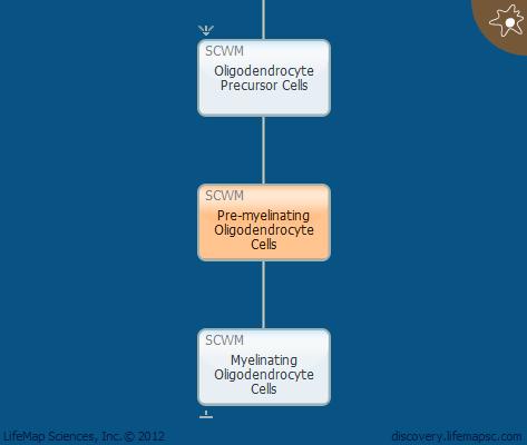 Pre-myelinating Oligodendrocyte Cells