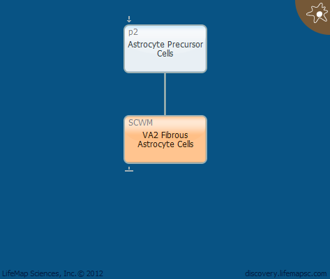 VA2 Fibrous Astrocyte Cells