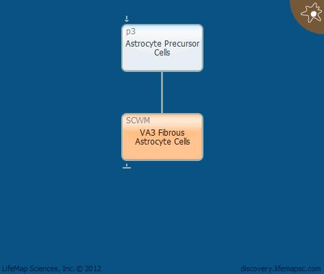 VA3 Fibrous Astrocyte Cells