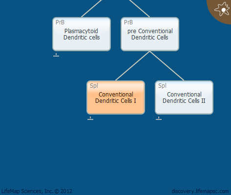 Conventional Dendritic Cells I