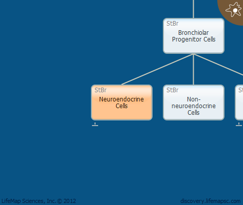 Neuroendocrine Cells