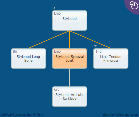 Stylopod Synovial Joint