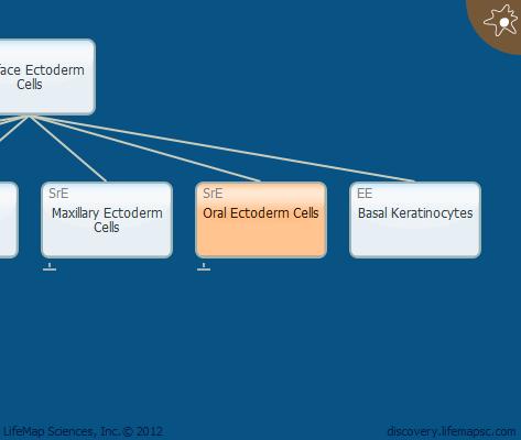 Oral Ectoderm Cells