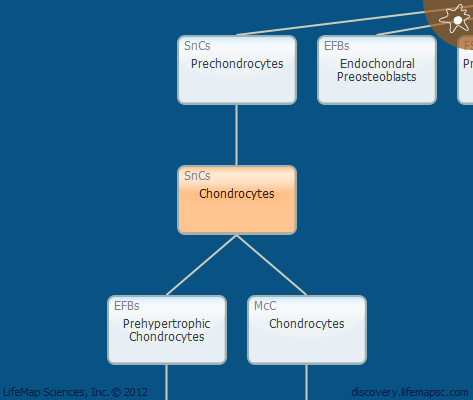 Chondrocytes