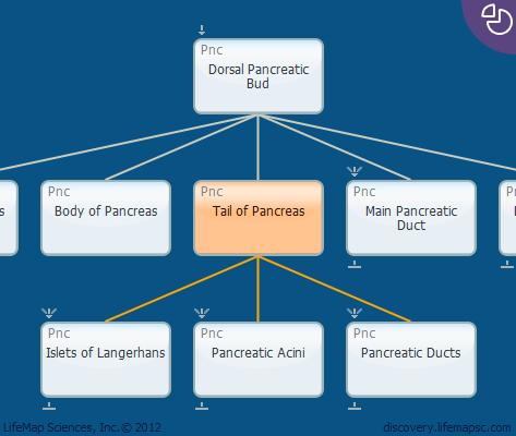 Tail of Pancreas