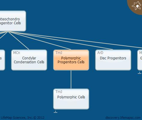 Polymorphic Progenitors Cells