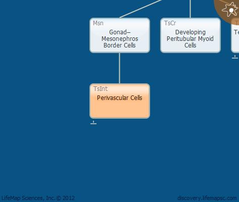 Perivascular Cells